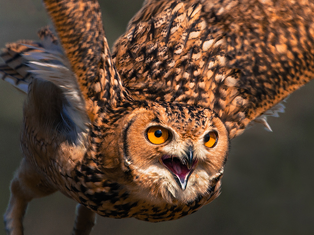 Birds of prey photography and training day at Mere Down falconry